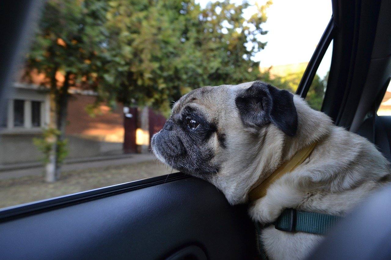 How To Get Dog Hair Out of Car