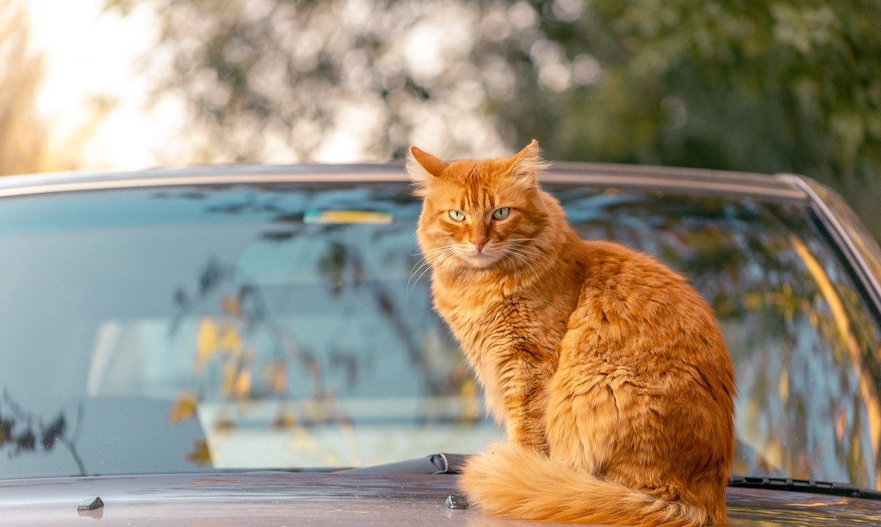 Paws Off: How to Keep Cats Off Cars